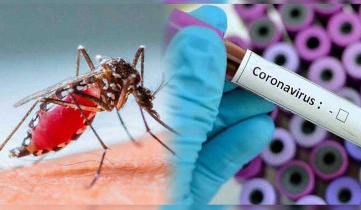 Las personas que hayan tenido dengue podrían ser indemnes al coronavirus, según estudios preliminares